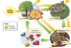 Sản xuất nông nghiệp hữu cơ organic nhà kính