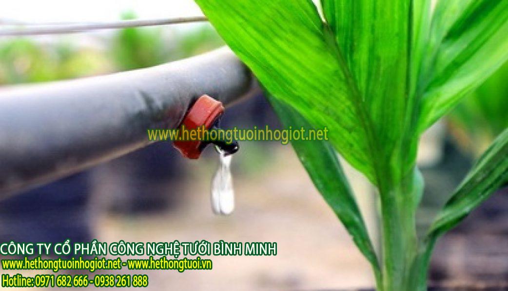 Hệ thống tưới nhỏ giọt tự động lắp vào đường nước máy
